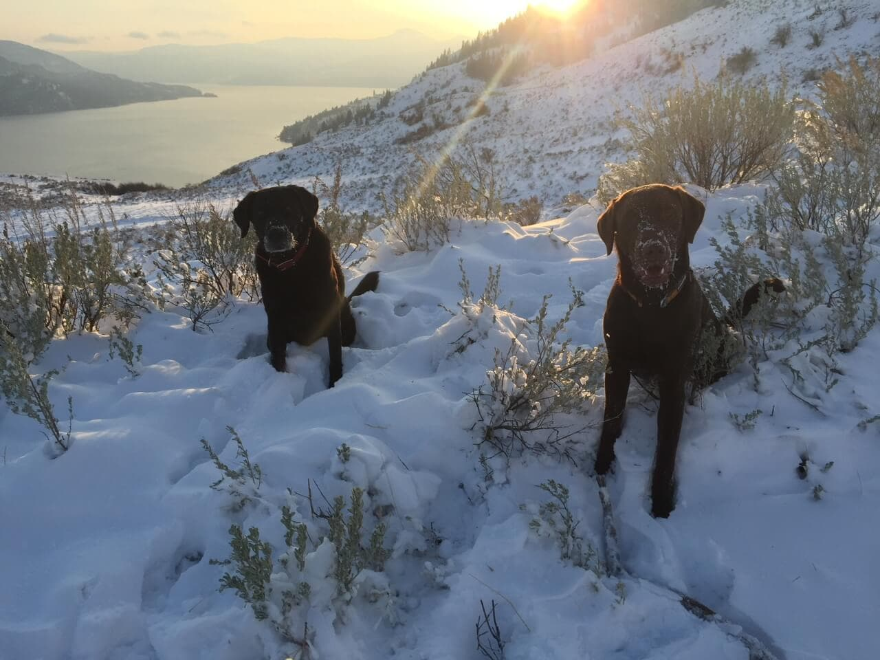 Scout And Molly The Rise