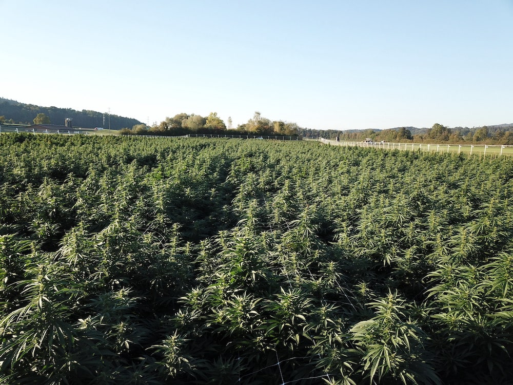 Pure Holding Ag Zukunft Meets Cannabis 4